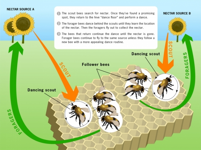 Image of honeybees efficient life strategy