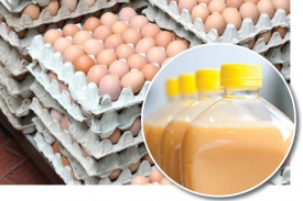 stacks of eggs in cartons